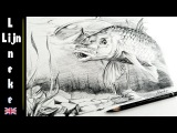 How to draw a realistic Carp fish under water with (Graphite) Pencil step by step