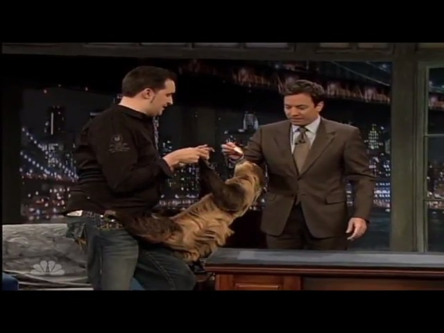 Jimmy Fallon Animals : a Giant RattleSnake, Lizard, Sloth, Kangaroo, and a Hedgehog with Jeff Musial