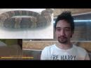 19.04.2017 Стрим со змеей на ЧЭ. Мексиканский щитомордник, гадюка такая