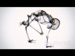 Занятия йогой в рентгеновских лучах hybr...animation