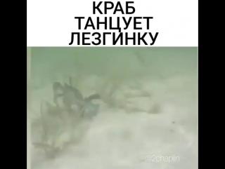 краб танцует лезгинку