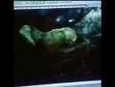 Jurassic park 3 - extended fight scene
