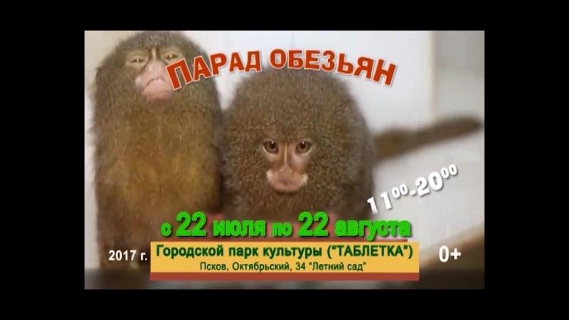 Парад обезьян 2017. С 22 июля по 22 августа (Таблетка)