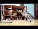 Котята Смешные коты и кошки Приколы с котами и кошками.mp4