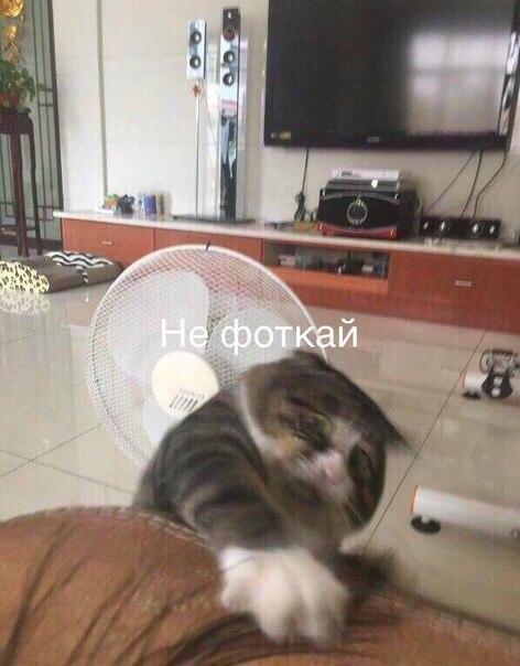 Фото №456274666 со страницы Вахтанга Антии