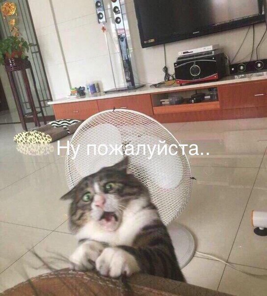 Фото №456274669 со страницы Вахтанга Антии