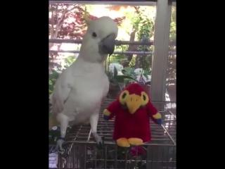 Игрушка повторяет за попугаем