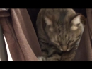 Гамак для кошки своими руками