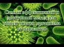Самый эффективный и доступный метод для общей чистки организма от паразитов