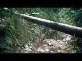 Snow Falling &amp Flowing Stream Sounds in the Forest Relaxing Sounds of Winter Nature Ambience