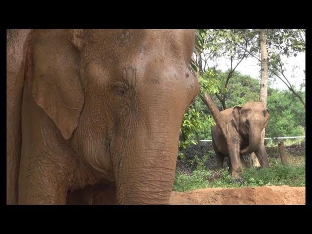 Samui Elephant Sanctuary A New Elephant Sanctuary of Thailand