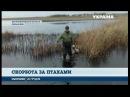 На Дніпропетровщині розгорівся скандал через розстріл лебедів