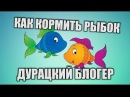 КАК ПОКОРМИТЬ РЫБОК How to feed fish