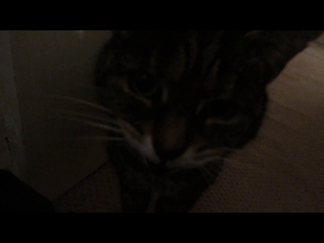My deaf cat doesnt realise how loud she is