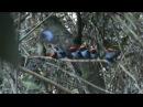Around the branch · coub коуб