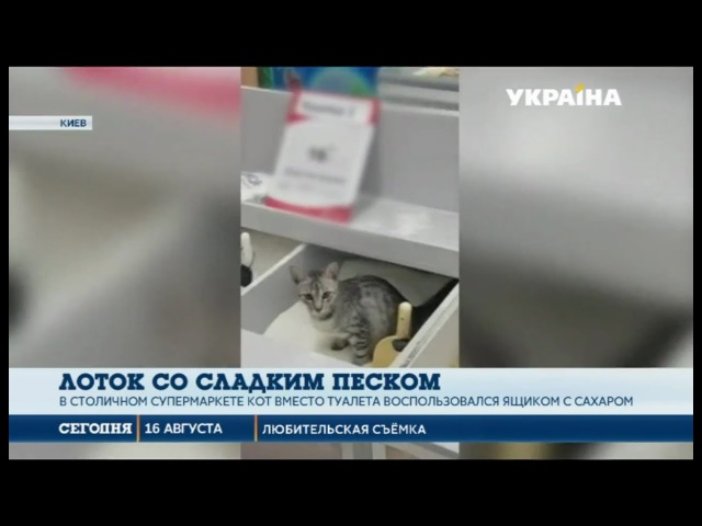 В столичном супермаркете кот использовал ящик с сахаром вместо туалета