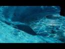 Кадры со дна океана уже не скрывают.Что живет в Марианской впадине.Документальный фильм