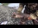 Рыбалка на речке Джарджан. 210 26.01.2017