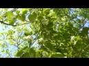 фильм Времена года стихи Шеховцова, музыка Чайковского. Читаю я