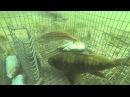 Ловушка на рыбу Нереальная охота на рыбу Необычные случаи на рыбалке 2018 Вот это рыбалка 2018 Ты н