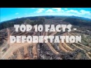 10 Deforestation Facts