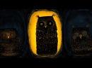 Diesel owls