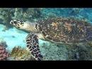 Египет красное море, март 2016 Egypt Red Sea ,turtle, March 2016