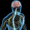Теленевролог | нервная система