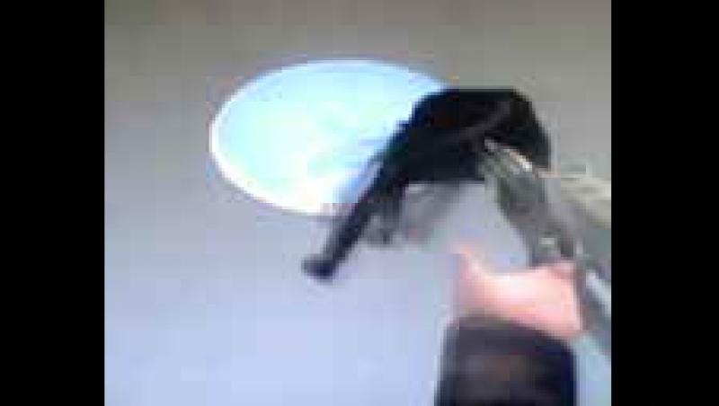 Филе кошатины летучей под дробовиковым соусом с ветерком