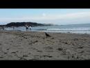 Ворон на пляже в Камакуре