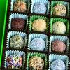 Chocolate Museum-Nhatrang