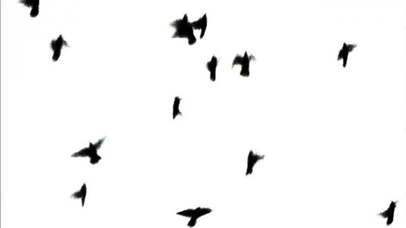 Blackbird Blackbird - PURE (official music video)