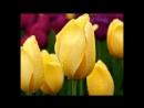 С 8 Марта! Музыкальное Видео Поздравление с Медународным Женским Днем! Стихи для