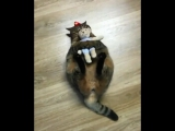 Любимая игрушка котика Васи