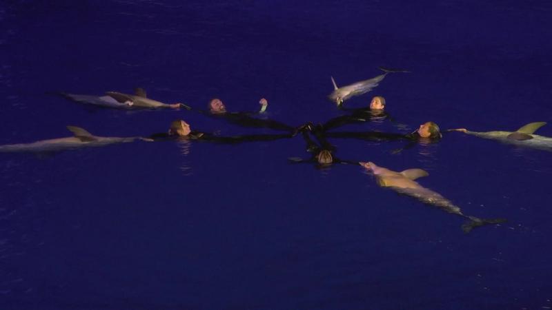 Delfines noche