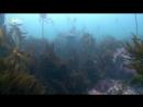 Nat Geo Wild Акула против хищника 2017 HDTV 1080i