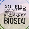 BioSea. Работа в сети интернет (без вложений)