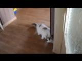 Аделина, и кошка Буся. (3).