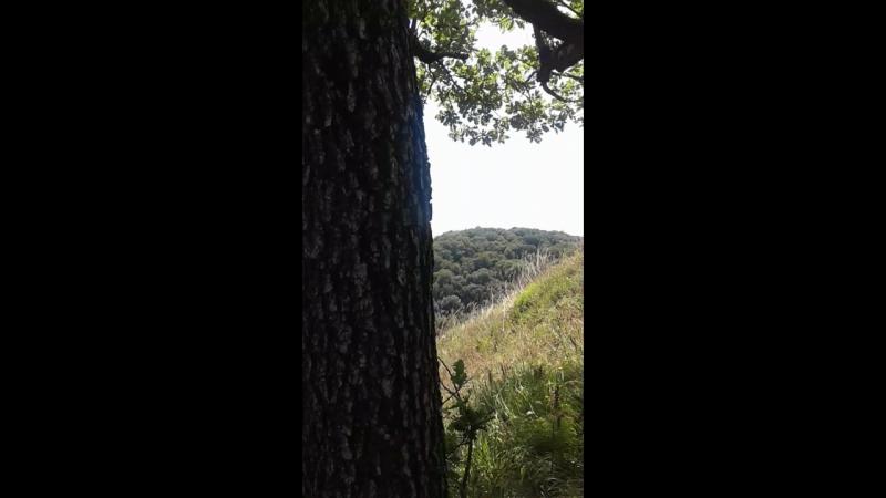 Вершина горы Кизинка   Краснодарский Край, Кавказ   Август 2017