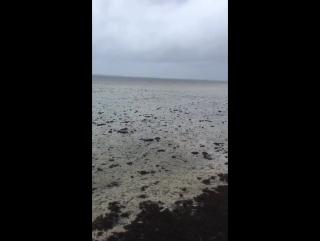 Auch in Tampa Florida verschwindet das Meer durch den Hurrikan Irma