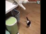 Котики эволюционируют!