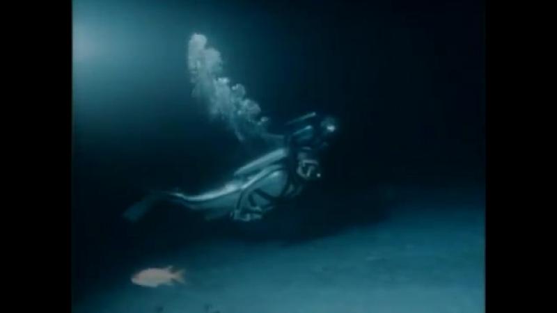 Одиссея Жака Кусто - Акулы острова сокровищ