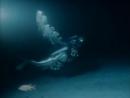 Одиссея Жака Кусто Акулы острова сокровищ