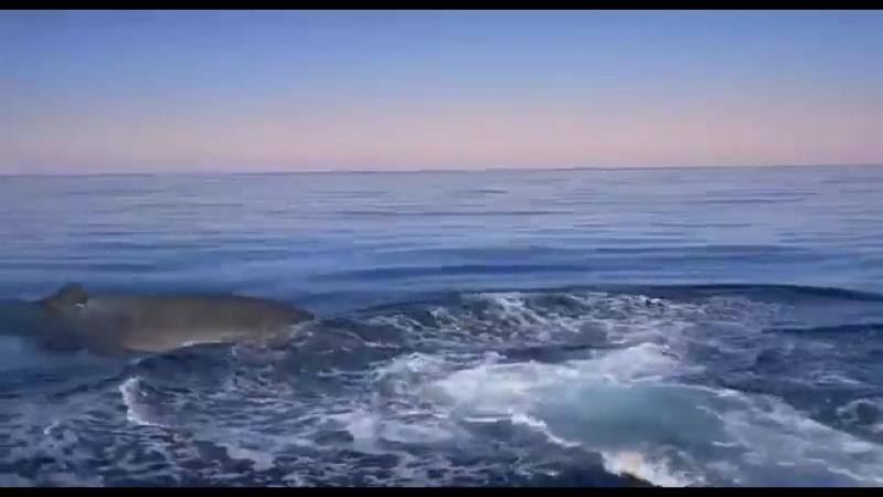 Мировой океан. Дикий мир. Документальный фильм