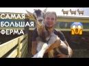 РЕКОРД! Самая большая ферма в России: козёл живет для секса, как доить козу, как делают сыр, Лукоз