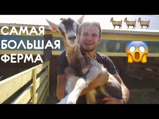 РЕКОРД! Самая большая ферма в России: козёл живет для секса, как доить козу, как д ...