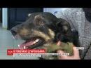Зі столичної ветклініки втік пес на лікування якого збирали усім світом