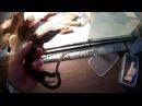 Еще один полосатый водяной варан (Varanus salvator)