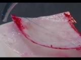 Surgeon stitches up pigeon egg membrane | CCTV English