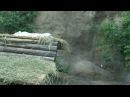 Лиса, белый тигр в зоопарке